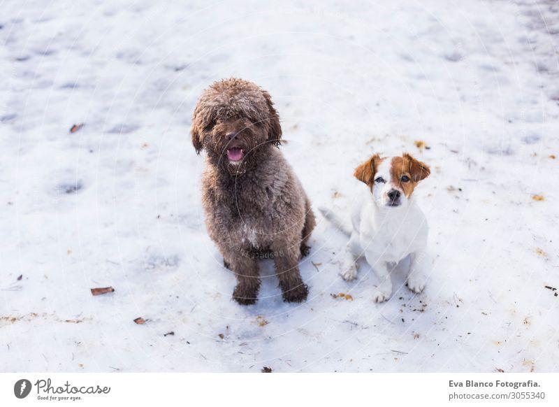 Ferien & Urlaub & Reisen Natur Hund Sommer schön weiß Landschaft Tier Freude Winter Berge u. Gebirge Gesundheit Lifestyle Liebe kalt natürlich