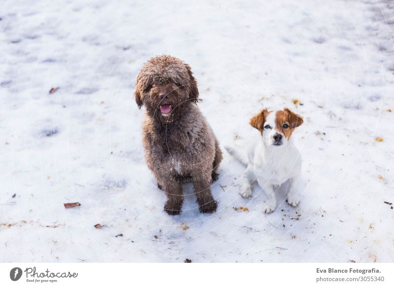 zwei süße Hunde am Berg im Schnee mit Blick auf die Kamera Lifestyle Freude Glück Freizeit & Hobby Jagd Sommer Berge u. Gebirge Freundschaft Natur Landschaft