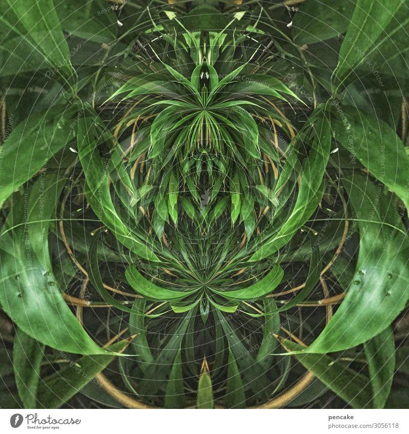 bamboo kobold Natur Sommer Pflanze Sträucher exotisch Garten Park Ornament Rätsel Religion & Glaube Schutz Symmetrie Phantasie Reflexion & Spiegelung Gnom