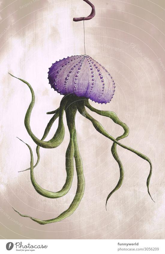 Muschelkrakenpflanze Pflanze schön grün außergewöhnlich Häusliches Leben Kreativität Grafik u. Illustration violett trendy Inspiration hängen Zeichnung