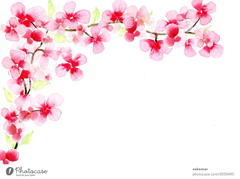 Kirschblütenzweig Kunst Kunstwerk Gemälde Aquarell Wasserfarbe auf Papier Natur Pflanze Frühling Baum Blüte Zweig ästhetisch Duft schön Kitsch rosa weiß