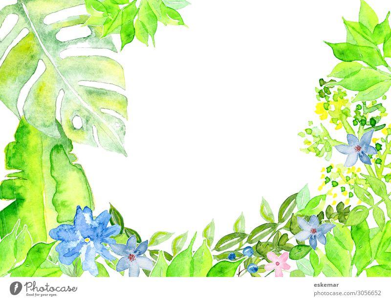 Blumen Sommer Kunst Gemälde Aquarell Wasserfarbe gemalt Natur Pflanze Frühling Gras Sträucher Blatt Blüte Grünpflanze Fensterblätter Gummibaum Kornblume Blühend