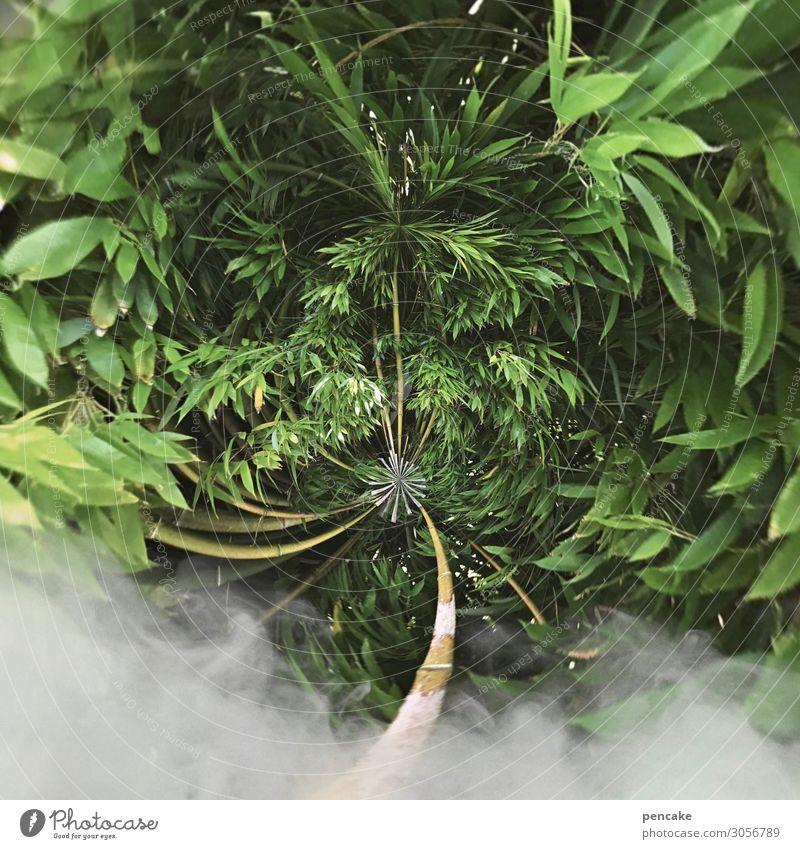 nebulös   smoke area Natur Sommer Pflanze Garten Erde Park Sträucher Zukunft Wandel & Veränderung bedrohlich Rauch exotisch Reichtum Urwald Umweltschutz
