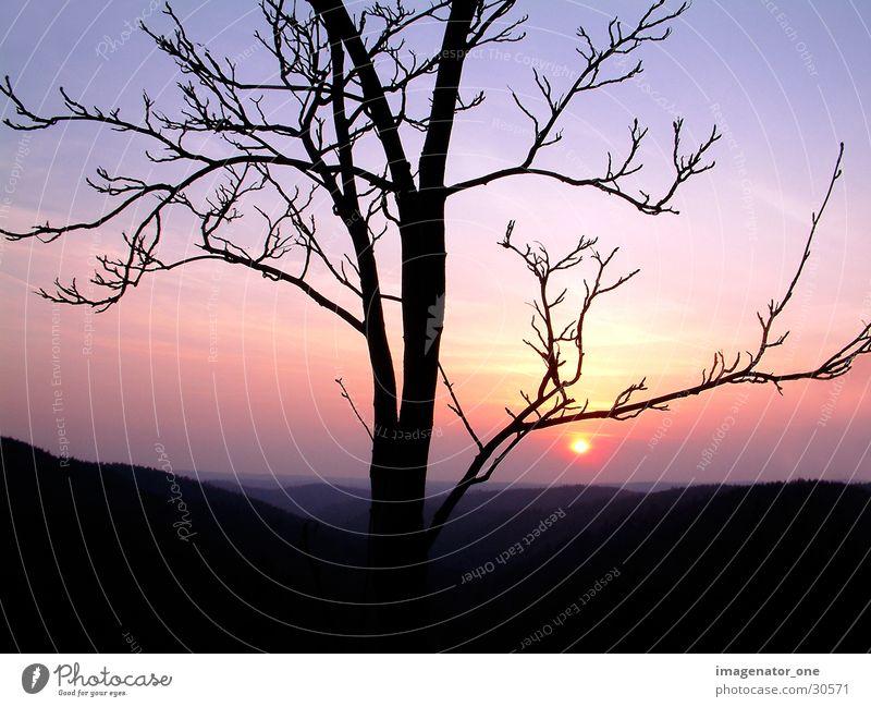 0001 Baum Sonne Abenddämmerung