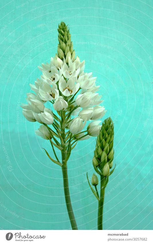 Wildblumen und Knospen Pflanze Blume Blüte Blumenstrauß ästhetisch natürlich wild grün weiß Trennung Pflanzenwelt Blütenknospen Ausgießer verwildert