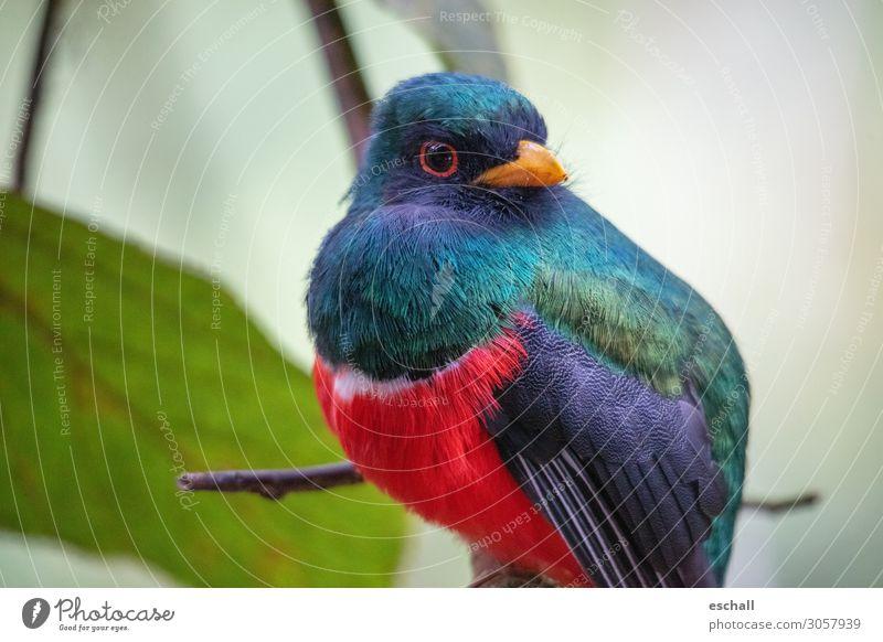 Natural Beauty exotisch Ferien & Urlaub & Reisen Abenteuer Ferne Safari Expedition Umwelt Tier Urwald Wildtier Vogel 1 fliegen sitzen ästhetisch frei