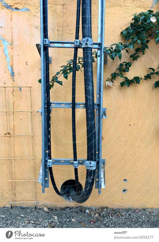 It's an uphill climb Wand Elektrizität Kabel verfallen Leiter Gitter abblättern Rohrleitung Leitung Efeu Ranke Kletterpflanzen Elektromonteur Gitterrost