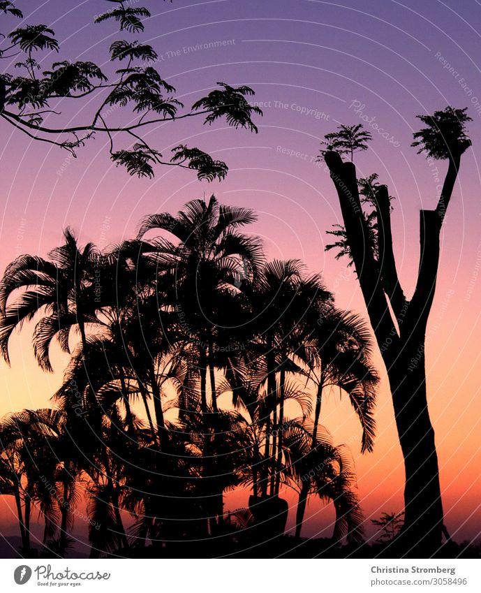 Abenddämmerung in Hoi An Vietnam Asien Farbfoto Außenaufnahme Ferien & Urlaub & Reisen Tourismus Ferne Abenteuer mehrfarbig Palmen Lichtspiel Farbspiel Ausflug