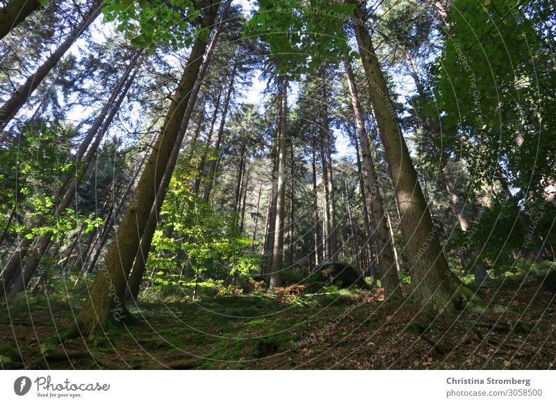 Waldlife Baum Natur Landschaft grün Außenaufnahme Umwelt Herbst Tag natürlich