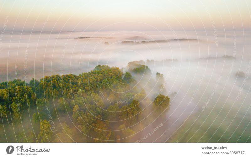 Morgendlicher Nebel über Fluss, Wiese und Wald. Natur Sonnenlichtszene ruhig Ferien & Urlaub & Reisen Tourismus Ausflug Abenteuer Ferne Freiheit Sommer Umwelt