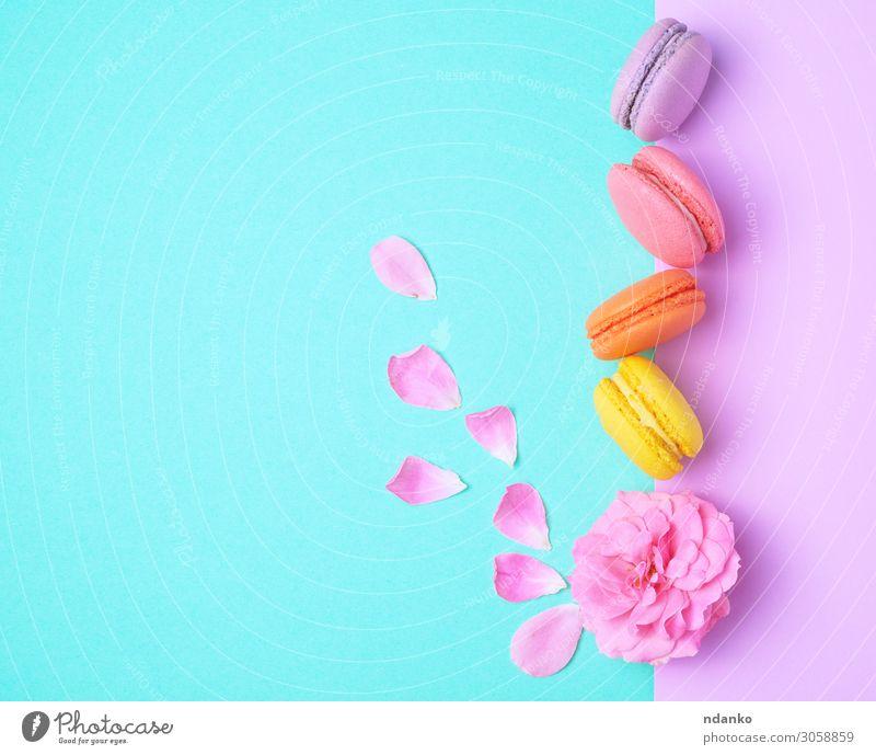 vier mehrfarbige Makronen mit Sahne Frucht Kuchen Dessert Süßwaren Blume lecker oben gelb rosa weiß Farbe Tradition Macaron Schaumgebäck Mandel sortiert