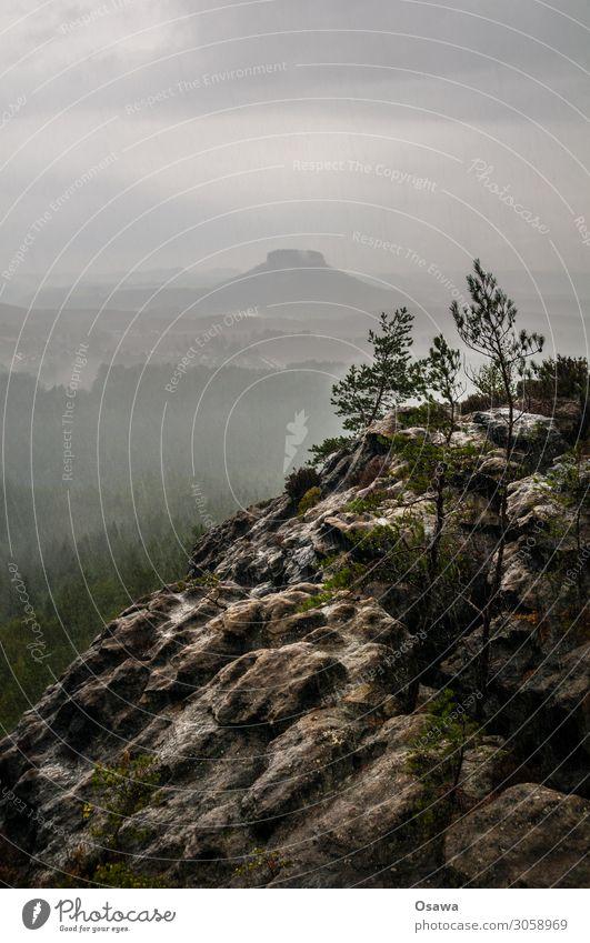 Regen in der Sächsischen Schweiz Landschaft Berge u. Gebirge Felsen Natur Mittelgebirge Gesteinsformationen Wald Baum Sächsische Schweiz Elbsandsteingebirge