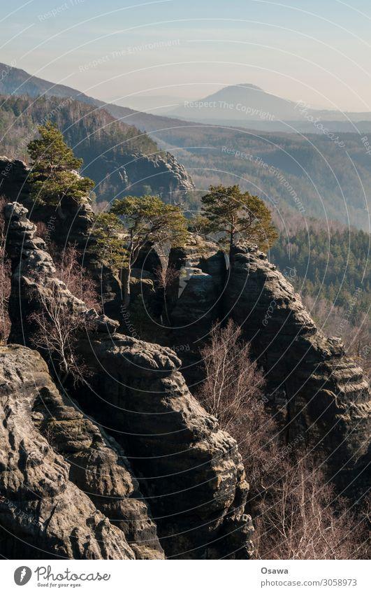 Sächsische Schweiz Landschaft Berge u. Gebirge Felsen Natur Mittelgebirge Gesteinsformationen Wald Elbsandsteingebirge Sachsen wandern Klettern Bergsteigen