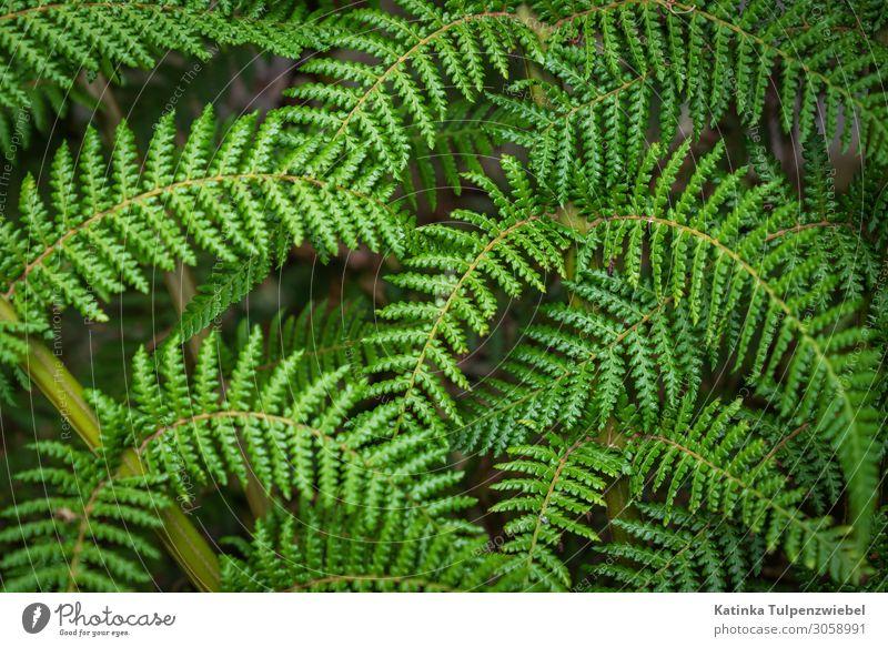 Grün grün grün grün Natur Pflanze Sommer Farn schön Wald frisch Blatt Außenaufnahme natürlich Naturphänomene Schatten Licht formatfüllend Klima Menschenleer