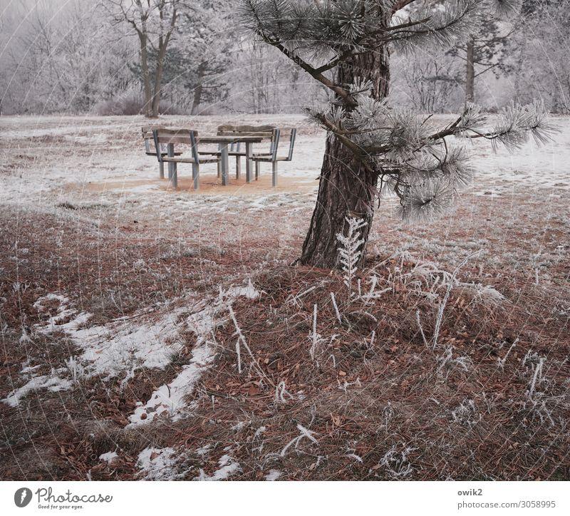 Winterschlaf Umwelt Natur Landschaft Pflanze Erde Schönes Wetter Eis Frost Schnee Baum Sträucher Kiefer Park Wald Sitzgruppe Stuhl Tisch einfach kalt