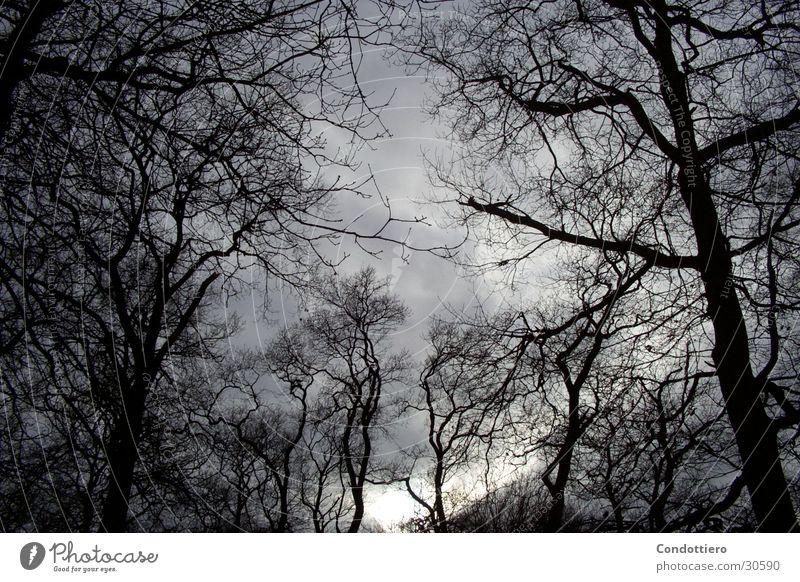 Dunkle Wolken graue Wolken dunkel bedrohlich Herbst Himmel Gewitter herbstlich