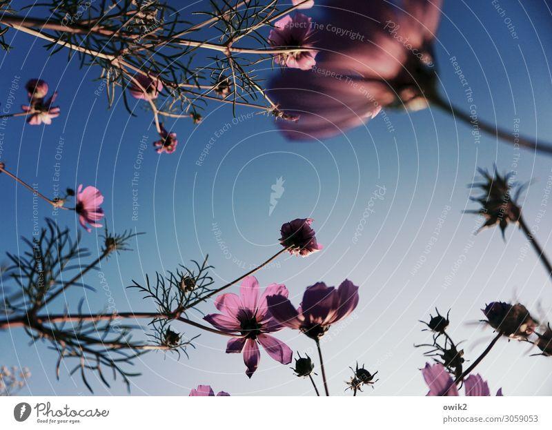 Geflecht Natur Pflanze Umwelt Blüte Wiese Bewegung Garten Schönes Wetter Blühend berühren viele Wolkenloser Himmel Stengel Schmuckkörbchen