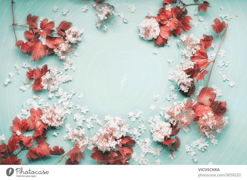 Rahmen aus weißen Blüten mit roten Blättern Design Feste & Feiern Natur Pflanze Blume Blatt Dekoration & Verzierung Blumenstrauß frame Hintergrundbild flower