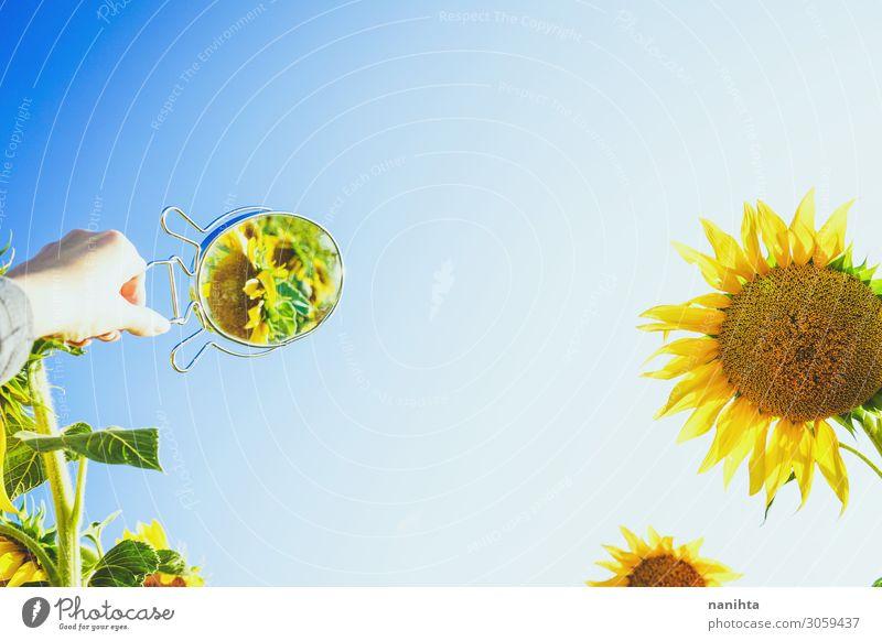 Sonnenblumenfeldfrüchte an einem sonnigen Tag Sommer Arbeit & Erwerbstätigkeit Natur Herbst Wärme Blume frisch natürlich gelb grün Farbe Erdöl Feldfrüchte