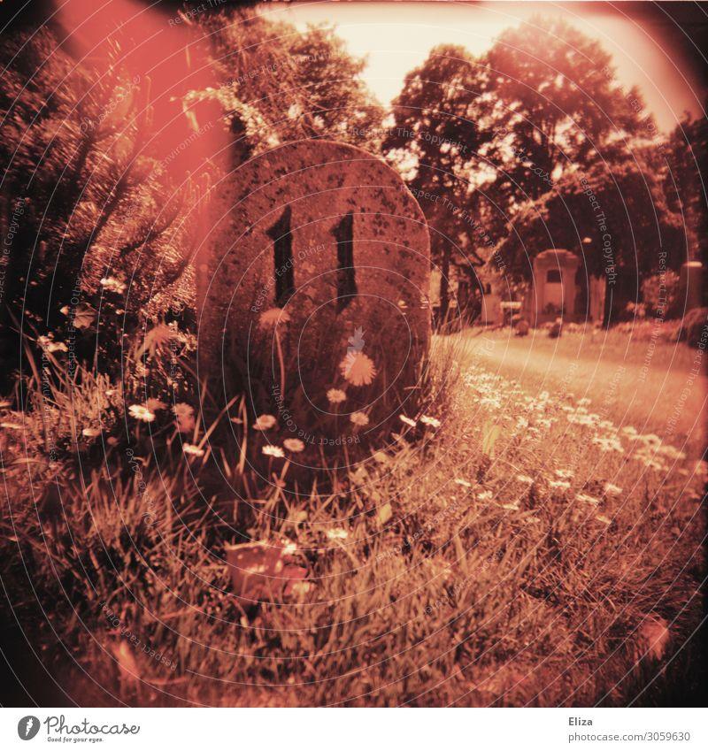11 Blume trashig rot Ziffern & Zahlen Friedhof Grabstein Experiment Light leak Doppelbelichtung Außenaufnahme Lomografie Holga Menschenleer Kontrast