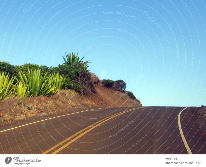 Right Curve on Maui / Hawaii Landschaft Wolkenloser Himmel Sommer Schönes Wetter Pflanze Sträucher Aloe Felsen USA Amerika Straße Fahrbahnmarkierung blau gelb