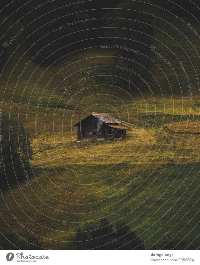 Die Kabine Ferien & Urlaub & Reisen Abenteuer Ferne Häusliches Leben Haus Architektur Umwelt Natur Landschaft Pflanze Erde Sommer Herbst Baum Gras Moos Wiese
