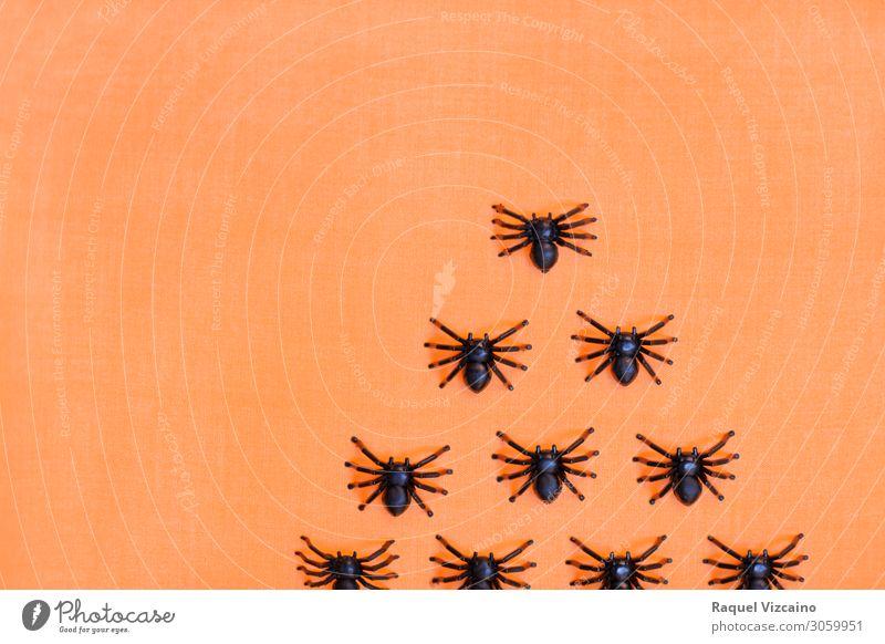 Erschreckende Halloween Taranteln Tier Spinne Tiergruppe gruselig orange schwarz Entsetzen bizarr Insekt Spinnentier Spinnennetz Arachnophobie Hintergrund