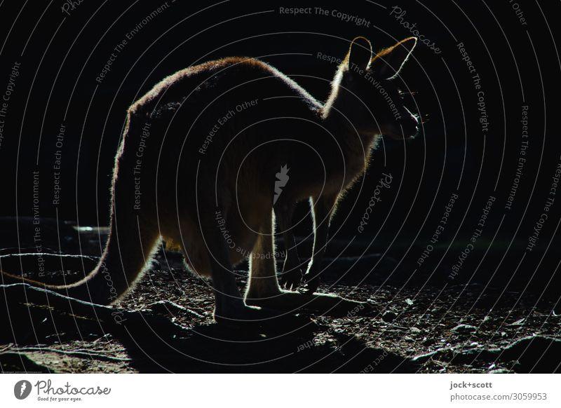 kangaroo Silhouette Känguruh 1 Tier dunkel einfach exotisch Originalität schwarz Inspiration Logo Hintergrundbeleuchtung Piktogramm Strukturen & Formen