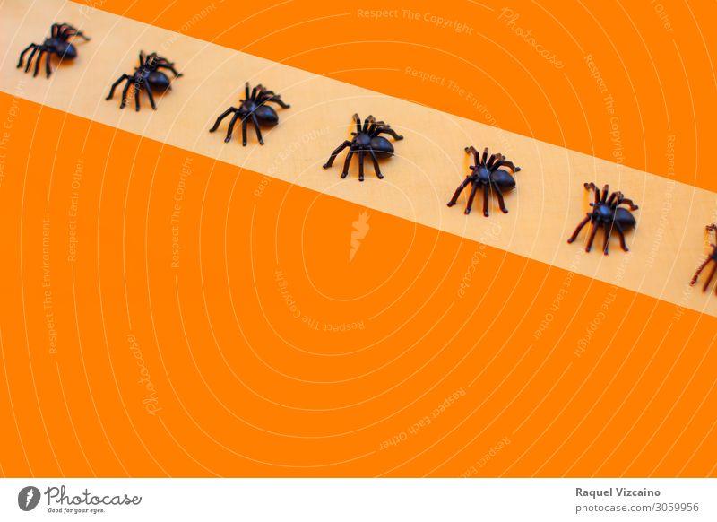 Schreckliche Halloween Taranteln Tapete Tier Spinne Herde orange schwarz Entsetzen Insekt Spinnentier Spinnennetz Arachnophobie Hintergrund giftig Schrecken