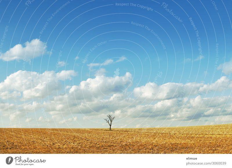 solitär Umwelt Natur Landschaft Himmel Wolken Sommer Klimawandel Schönes Wetter Baum Feld Ferne hell Stadt blau gelb Romantik Gelassenheit ruhig träumen