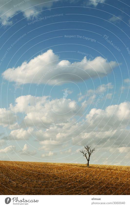abgeerntet Natur Erde Himmel Wolken Sonne Sommer Schönes Wetter Baum Feld dehydrieren Stadt blau weiß Romantik Fernweh Einsamkeit Senior ästhetisch