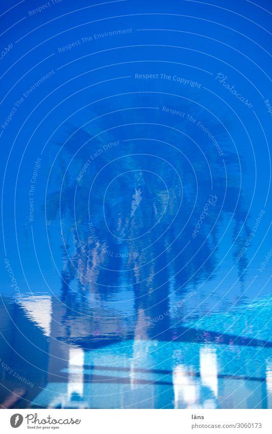 Palme im Pool gespiegelt Schwimmbad Ferien & Urlaub & Reisen Tourismus Insel Santorin Mauer Wand Terrasse blau türkis weiß Vorfreude Erwartung Freizeit & Hobby
