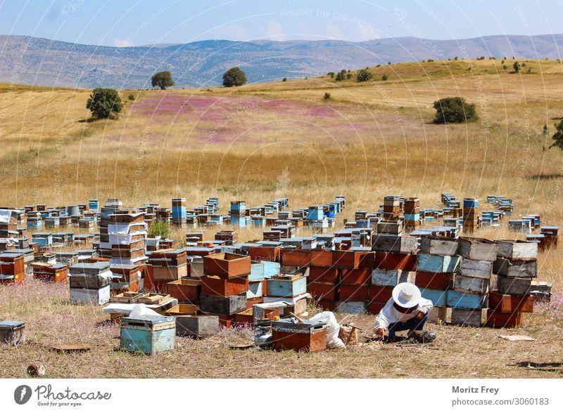 Traditional beekeeper at work. Sommer Natur Tier Arbeit & Erwerbstätigkeit Ferien & Urlaub & Reisen verkaufen apiculture backyard beekeeping