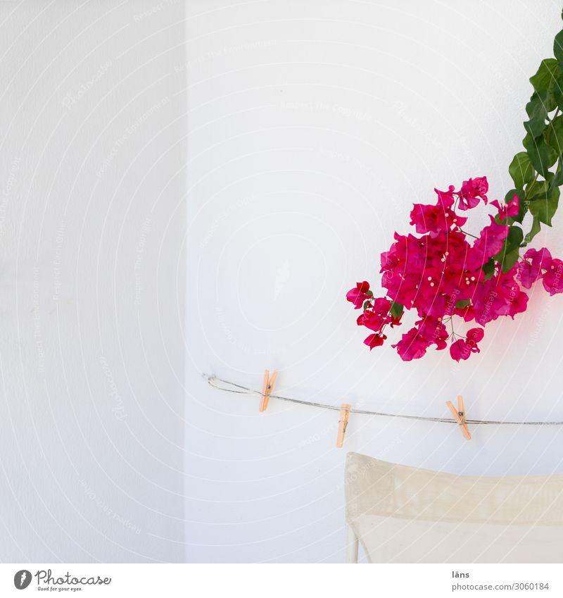 Bougainvillea Wäscheleine Wand Wäscheklammer Blühend Griechenland weiß rot Farbfoto Menschenleer Sonnenlicht Textfreiraum oben Mauer Schönes Wetter