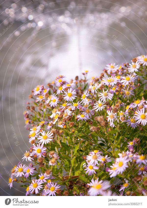 ganz blümerant. Blumen Blühend Natur Pflanze Blüte Sommer Farbfoto Außenaufnahme Nahaufnahme schön gelb grün weiß natürlich frisch Wasser Springbrunnen Flora