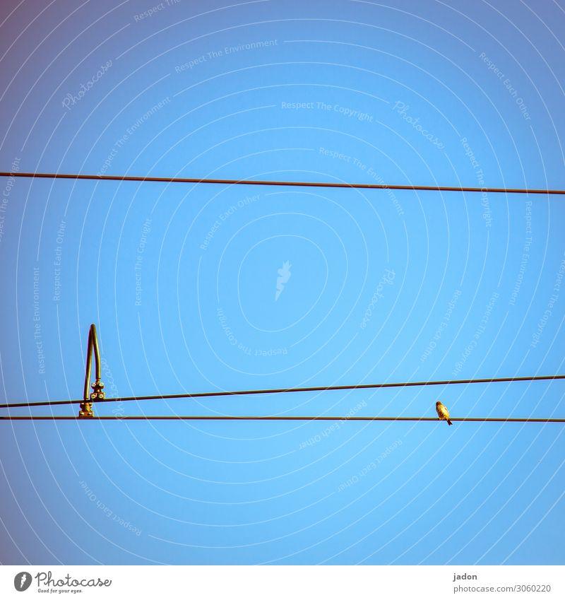 sitzgelegenheit.. Himmel Wege & Pfade Straßenbahn Tier Vogel 1 sitzen oben blau gold Langeweile Schwerpunkt Linie gerade Neigung Oberleitung Klammer Bogen