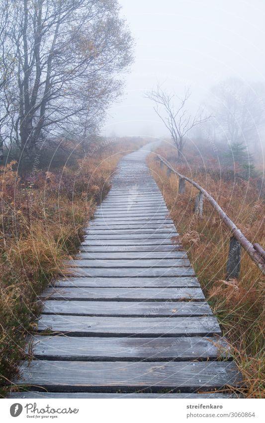 Ziel | nebulös Ausflug Abenteuer wandern Umwelt Natur Landschaft Pflanze Urelemente Wassertropfen Herbst schlechtes Wetter Nebel Baum Gras Sträucher Moor Sumpf