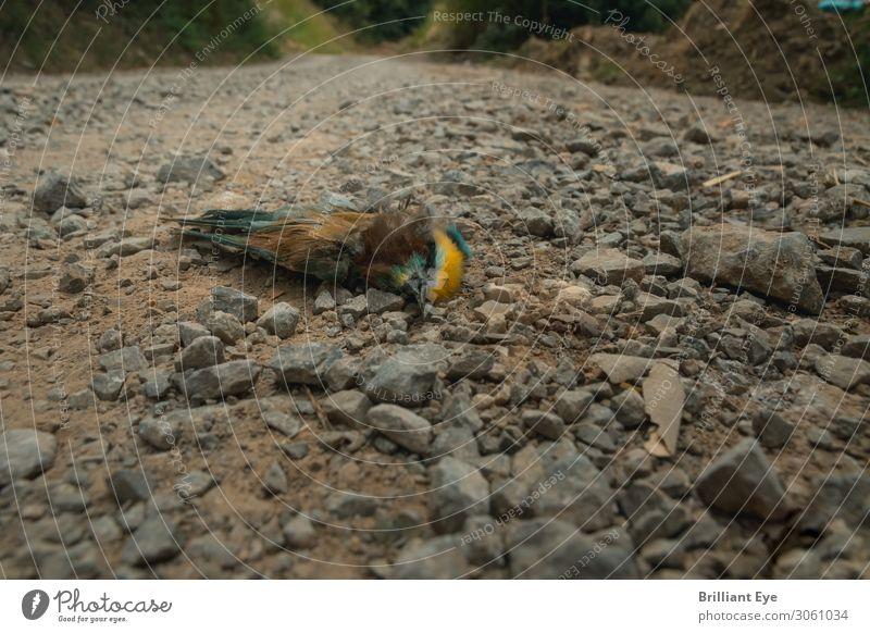 ver(ende)t. Natur Sommer Tier Totes Tier Vogel 1 liegen mehrfarbig Tod Einsamkeit Ende Perspektive Verfall Wege & Pfade Schotterstraße Schotterweg gefiedert
