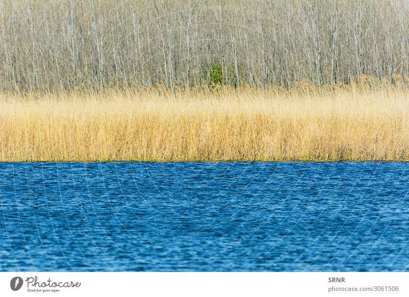 See Strand Geldinstitut Umwelt Natur Landschaft Pflanze Wasser Gras Sträucher Wald Seeufer Fluss blau Bulgarien Buchse ökologisch Ökosystem Europa Schilfrohr
