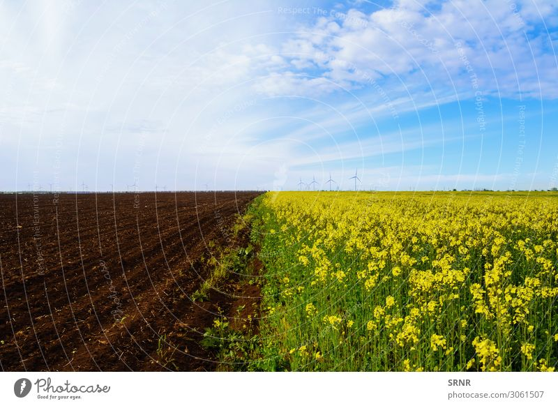 Felder Umwelt Natur Landschaft Pflanze Erde Himmel Wolken Horizont Wetter Wachstum landwirtschaftlich landwirtschaftliche Nutzfläche Ackerbau anbaufähig