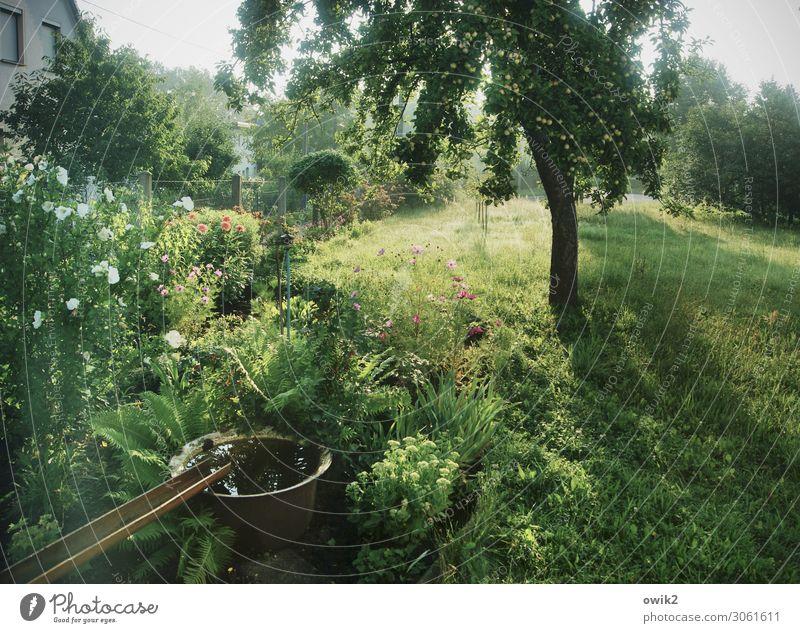 Grün und golden Umwelt Natur Landschaft Pflanze Wasser Wolkenloser Himmel Schönes Wetter Baum Gras Sträucher Blatt Blüte Blütenpflanze Blume Garten Wiese Dorf