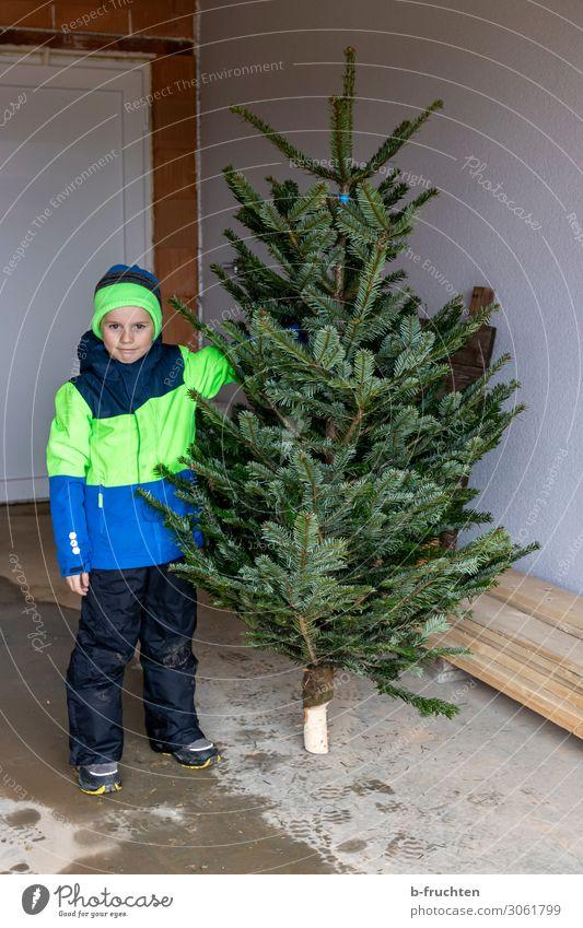 Weihnachtsbaum Winter Weihnachten & Advent Kind Kindheit 1 Mensch 3-8 Jahre Baum Jacke Mütze Arbeit & Erwerbstätigkeit wählen berühren festhalten stehen