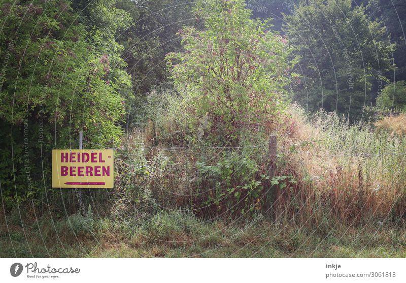 Heidelbeeren Frucht Blaubeeren Ernährung Bioprodukte Landwirtschaft Forstwirtschaft Direktverkauf Umwelt Natur Pflanze Sommer Herbst Schönes Wetter Baum