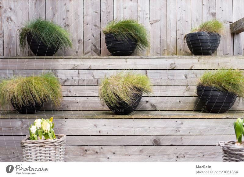 Bepflanzte Blumenschalen auf einem Posest Pflanze Frühling Gras Grünpflanze Topfpflanze Freizeit & Hobby planen Blumentopf Dekoration & Verzierung Garten Holz