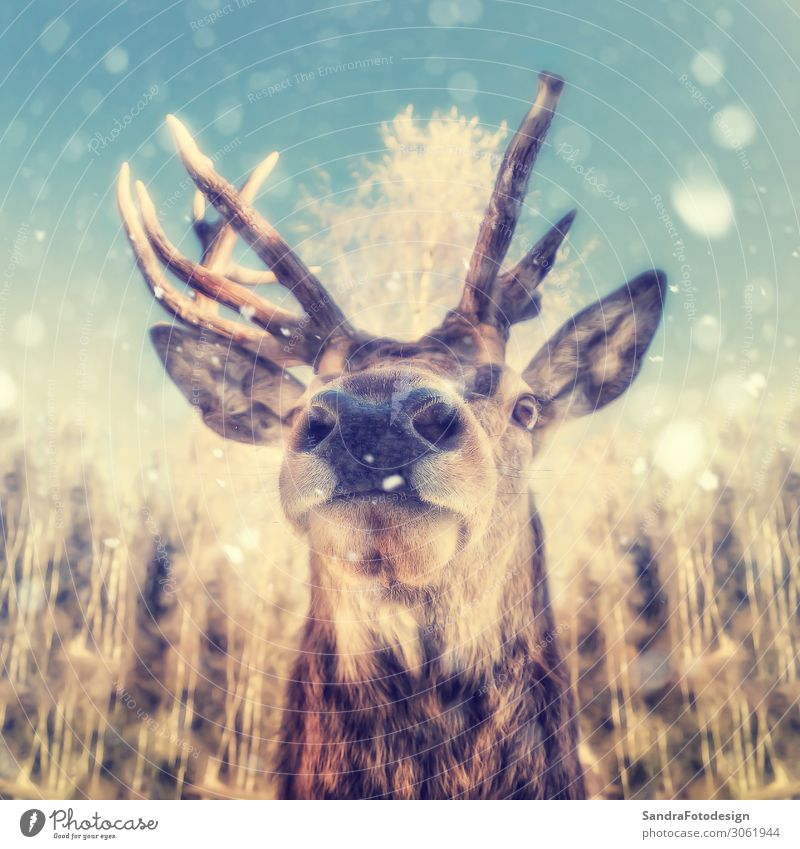 Portrait of a deer with snowflakes Natur Wildtier Tiergesicht Zoo 1 Kraft Willensstärke animal animal themes antler autumn brown buck fall fish eye optic forest