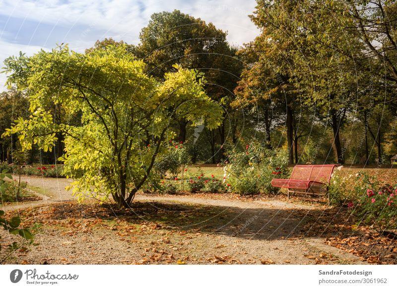A red bench in the middle of a park Spa Ferien & Urlaub & Reisen Tourismus Ausflug Sommer Natur Sonne Rose Garten Park Gastfreundschaft achtsam geduldig ruhig