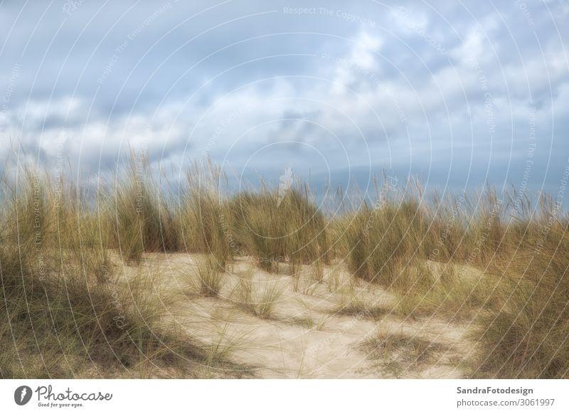 Dunes of Cala Mesquida, Mallorca with a blue sky Erholung Schwimmen & Baden Ferien & Urlaub & Reisen Tourismus Freiheit Sommer Sommerurlaub Sonne Strand Meer