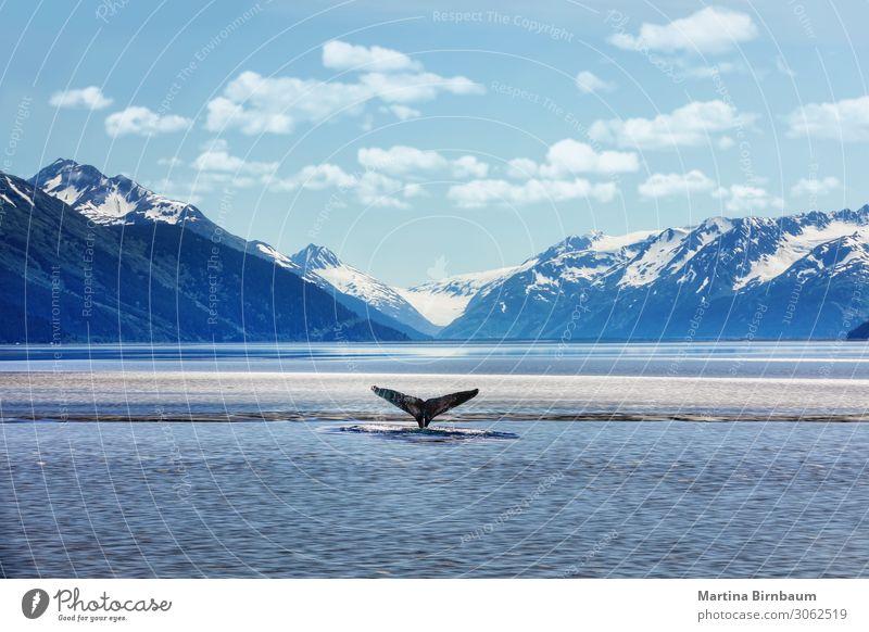 Himmel Ferien & Urlaub & Reisen Natur Sommer blau schön Landschaft Meer Winter Berge u. Gebirge Park Aussicht beobachten Lebewesen Norwegen Gletscher