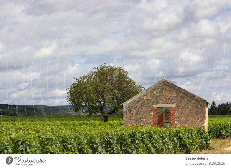 Im Burgund Getränk trinken Wein Sekt Prosecco Wohlgefühl Zufriedenheit Sinnesorgane Ferien & Urlaub & Reisen Tourismus Haus Natur Landschaft Himmel Wolken Klima