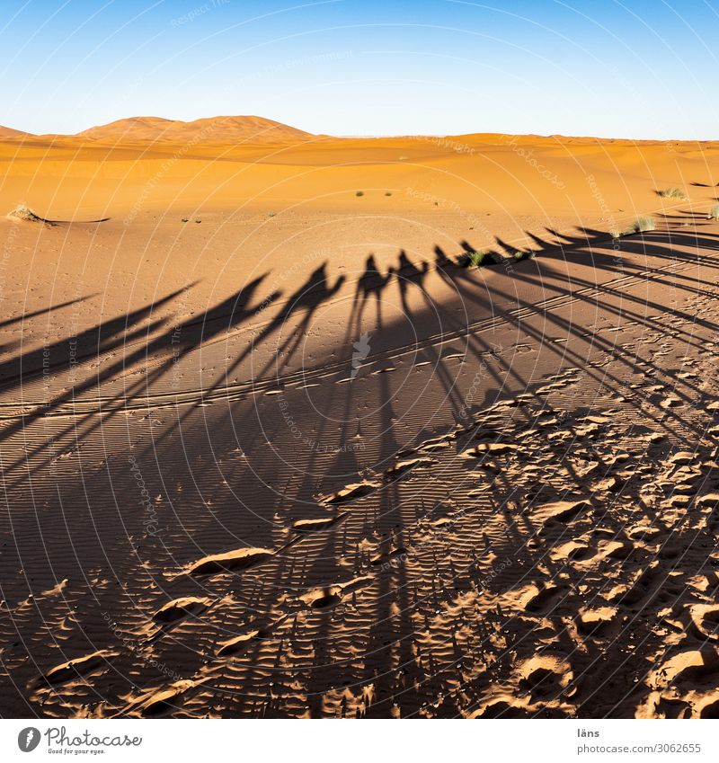 Karawane Vlll Ferien & Urlaub & Reisen Tourismus Ausflug Ferne Mensch Leben Menschenmenge Wüste Sahara Wege & Pfade Karavane Kamel Dromedar Tiergruppe blau